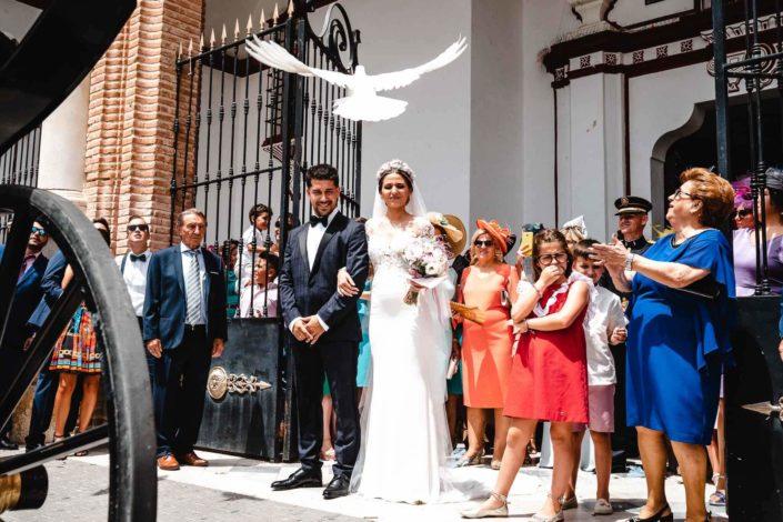 Recién-casados-paloma